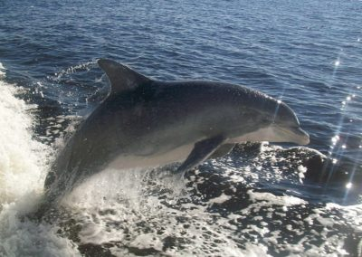Dolphin Sightings Album